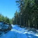 V lese je opět sníh a takto pokračujeme dalších 6 km.