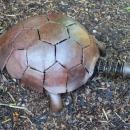 Jiná želva