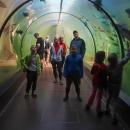 Expozice Živá Voda v Modré je vlastně podvodní tunel