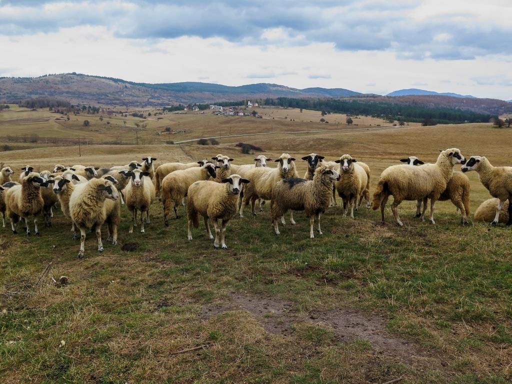 Krajina je tady hodně opuštěná, člověk potká víc ovcí než lidí.