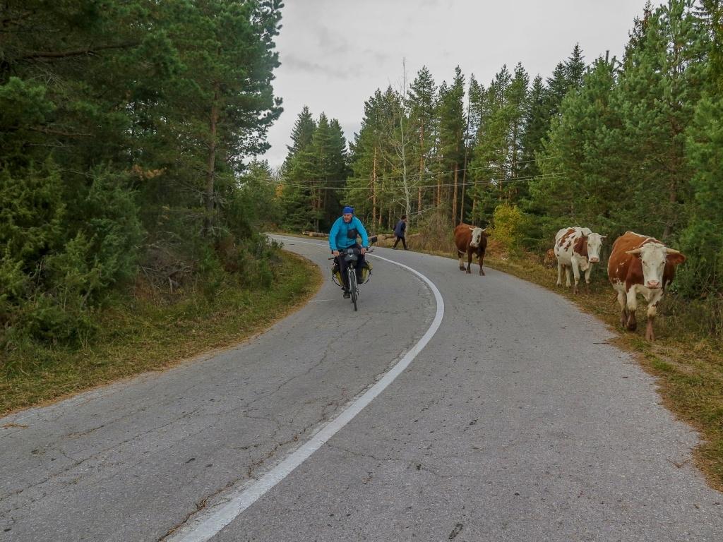 Paní těch krav měla asi 11 a ptala se nás, jestli jsme je neviděli. Naháněla je po širokém okolí.