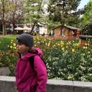 U nás sotva roztál sníh, a tady už kvetou tulipány. Jen Šárka se moc nechtěla fotit.