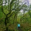 Vzhůru nahoru zajímavým lesem - a mně došla baterka ve foťáku, takže zbývající fotky dnešního dne budou z mobilu