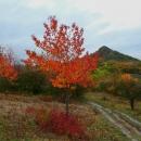 Podzimní barvy, nikterak jsem to nepřibarvovala. Před námi Srdov. Značka uhýbá do Mnichova, pěšinka nás ale spolehlivě zavede na vrcholek i bez značení.