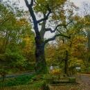 Cestou domů jsem naplánovala ještě dvě vlastivědné zastávky. První byl Oldřichův dub u Peruci, kde se podle pověsti setkali kníže Oldřich a pradlena Božena.