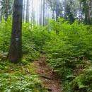 Autem do Bystřice Klodské a pak vzhůru (i když se to nezdá, převýšení je přes 600 metrů!) Pěšinka místy připomínala zarostlé cesty Slovenského Rudohoří