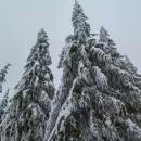Vánoční stromky :-)