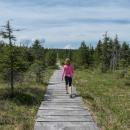 Cesta po hřebeni na Holubník - jmenuje se opravdu Hřebenovka