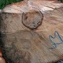 Tohle nás zaujalo, jak asi vznikl strom ve stromě?