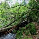 Na jednom místě se musely prolézt spadlé stromy, ale dalo se...