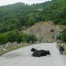 Tolik zvířat na silnici jsem ještě nikde neviděla