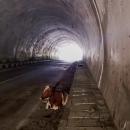 Extrém byla kráva ležící v tunelu.