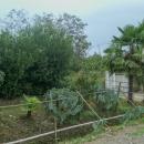 Jsme v tropech :-)