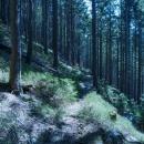 A pak jsme zalezli do lesa. Pěšinka vede dokonale po vrstevnici, skoro by se dalo říci i trail.