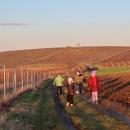 Na cestě z Kobylí do Vrbice - děti našly na poli záhadné plody