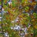 Už je podzim