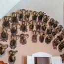 Ze sbírky loveckých trofejí