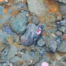 Voda je čirá, najdete žábu na prameni?