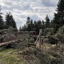 Sedlo Puchača. Aby nešlo v dnešní době přejet hranice po lesní cestě, někdo pokácel stromy a navalil kameny, aby cestu zatarasil :-(