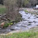 Někdo si dal chladit basu do řeky a povolal hlídacího psa :-)