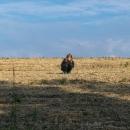 Noc byla teplá, ale Šárka se ráno šla nahřát na slunce na nedaleké pole