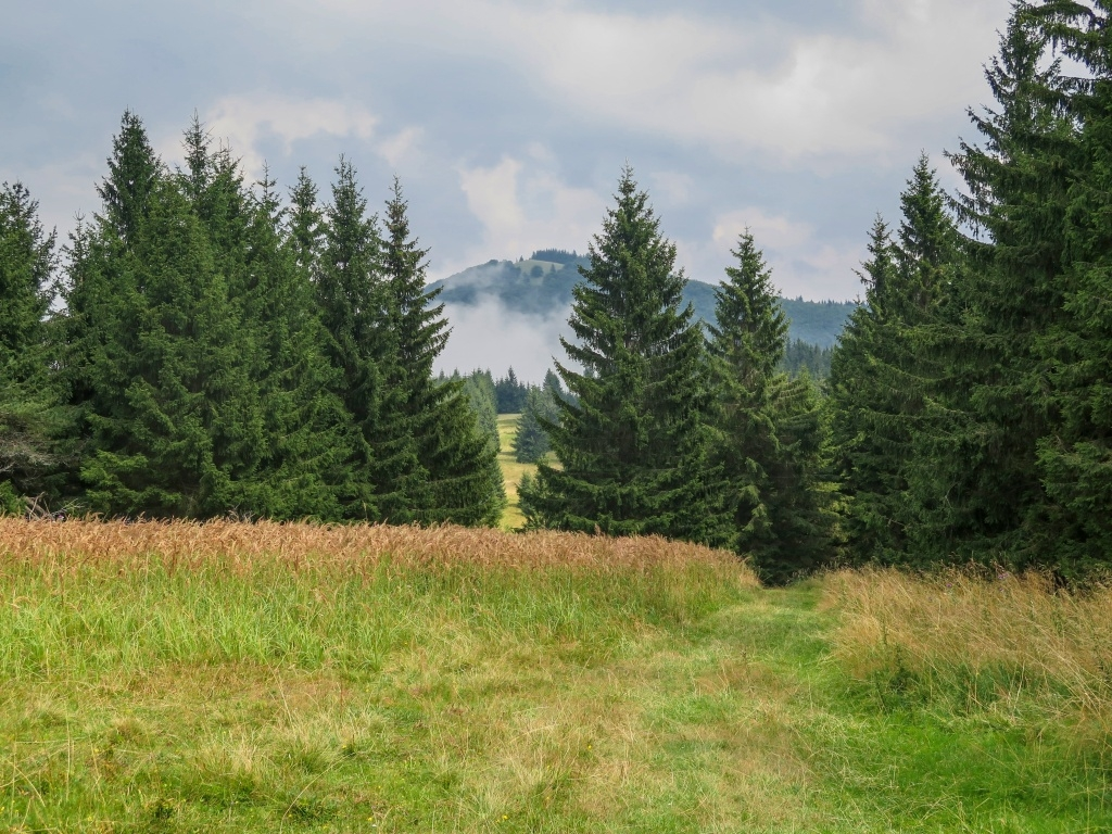 To je ona, Hnilická Kýčera, celkem takový zdánlivě nevinný, 1217 m vysoký kopeček.