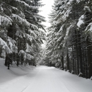 Silnice na Suchák je bílá!!!! (katastr obce Orličky).