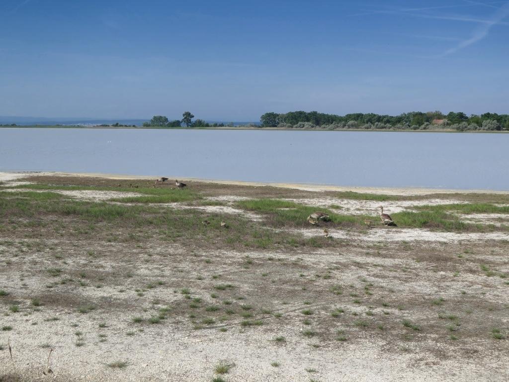Kolem Nezideru se vyskytují další jezírka, toto je pravděpodobně Oberer Stinkersee, ta barva vody je skutečně taková!