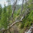 Dnes jsou stromy již odklizené, přes cestu jich zbylo jen minimálně, cesta je pohodlná.