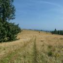 Vyšli jsme z lesa na nádherné louce - jmenuje se to tu Vasiľovská hoľa.