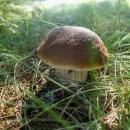 Potkali jsme akorát houbaře