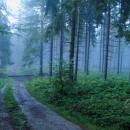 Vydali jsme se po rozbahněné modré značce směr Bačówka na Krawcówém Wierchu.