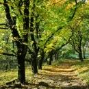 Podzimně zbarvený les v Soutěsce