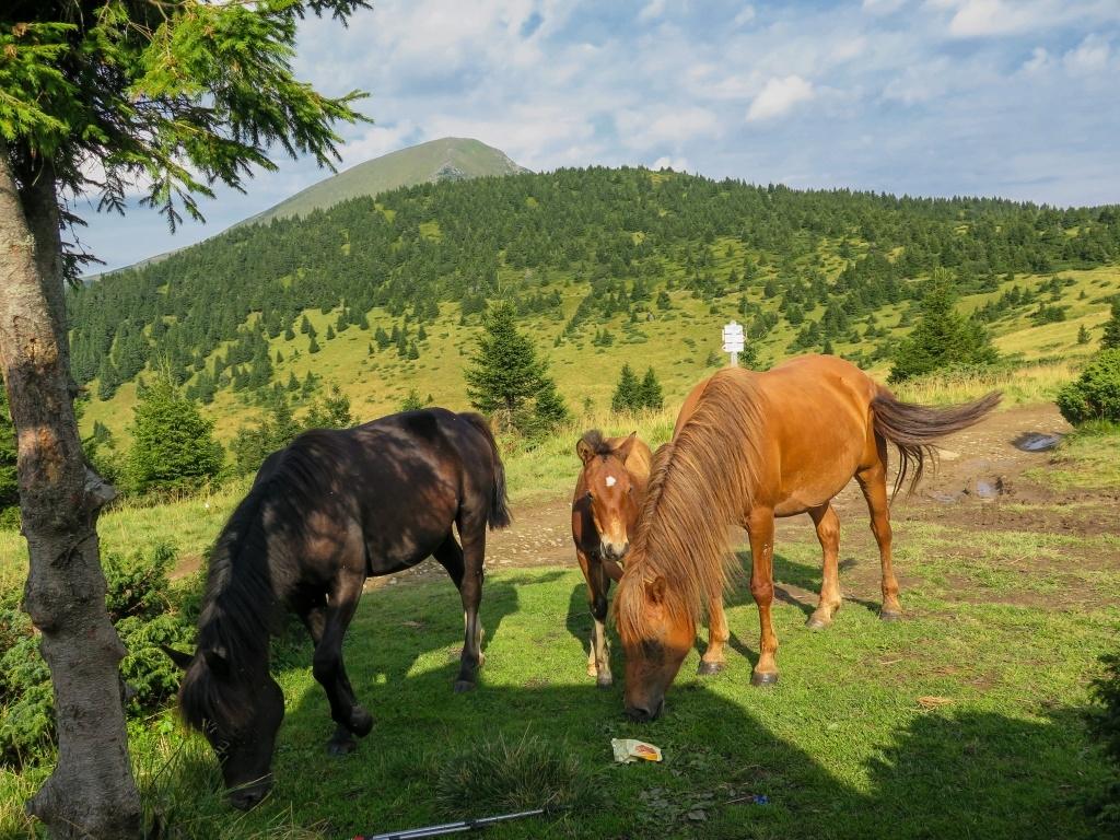 Rozladění jsme dorazili na poloninu Skopeckou, kde jsme krátce posvačili spolu s koníky.