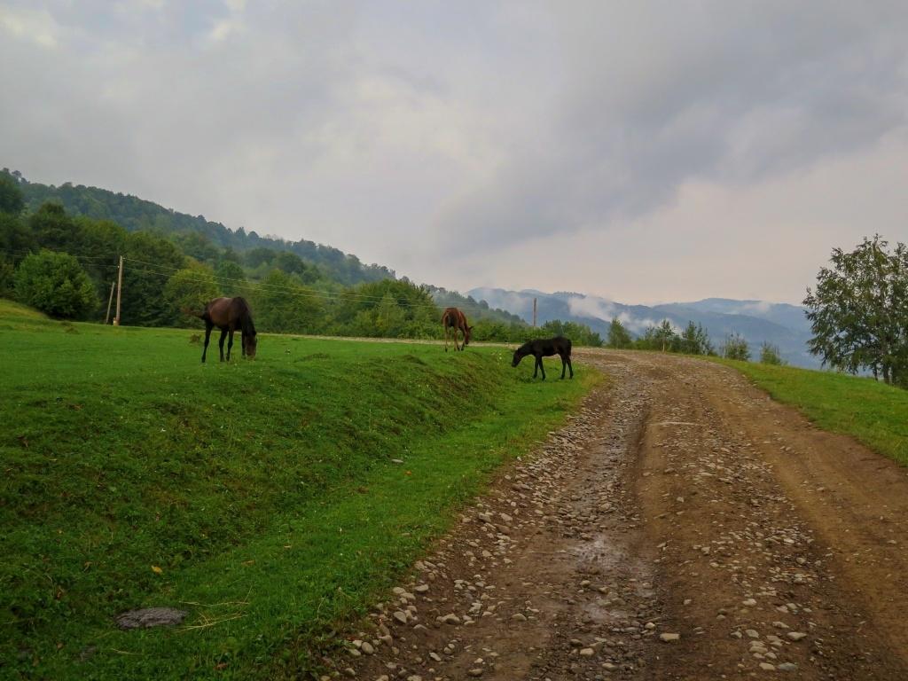... krajinu malebně doplňovali pasoucí se koně