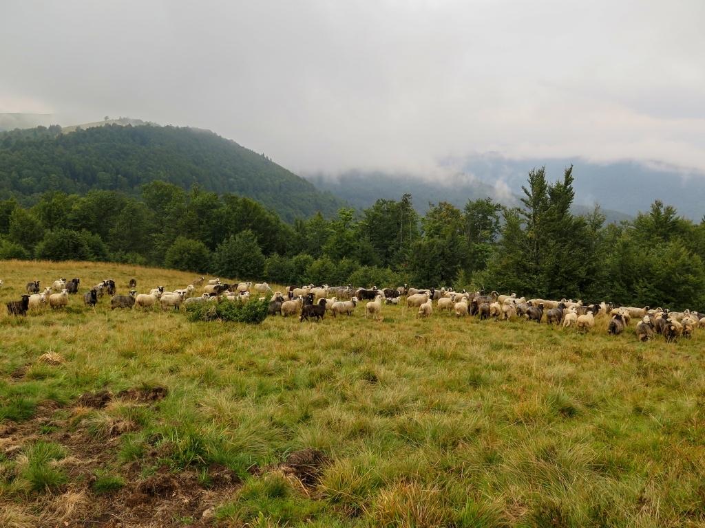 U turbázy jsme nejprve narazili na stádo ovcí