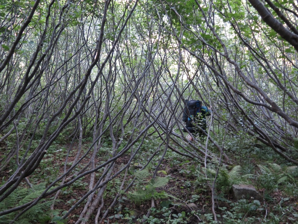 A tak jsme si zoufale hledali cestu mladými a pevnými stromky, které nás vetřelce šlehaly svými silnými větvemi. A absolutně jsme ztratili pojem o směru a o čase a jenom se rvali dopředu, protože zpátky už to nešlo vůbec.