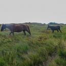 Koně na polonině