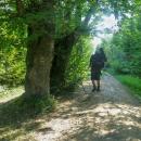 ... a už jsme v lese. Po dlouhé době se objevila turistická značka :-)