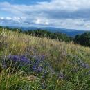 A je tu nádherně. Všude kvetou horské hořce a vlevo v dáli trčí - já vím, že se mi budete smát - ale on tam prostě je, Pikuj.