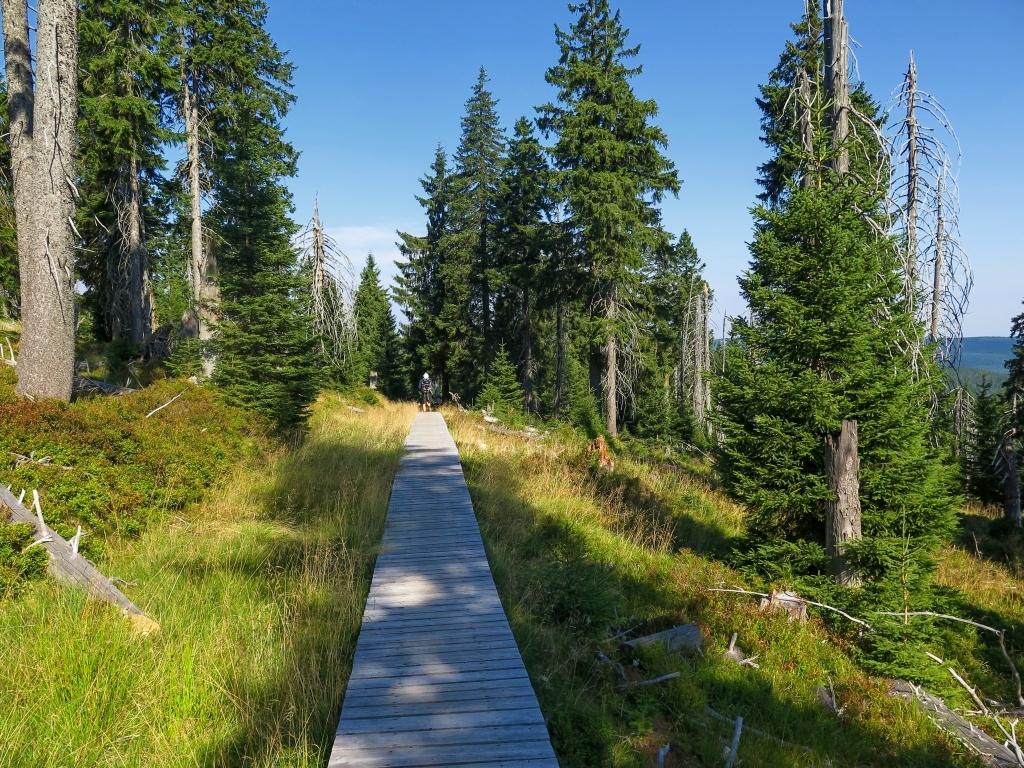 I dneska se držíme tradiční zelené a nechybí dřevěné chodníčky