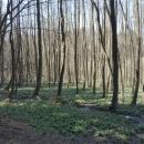Les plný bledulí