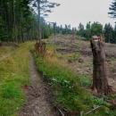 Hřeben vypadá asi takto. Chvíli les, chvíli polom. To nejhorší je už odvezené, zbyly tu jen větve, které shnijou samy. Značka občas je, občas cestu hledáme s mobilem v ruce. Z té správné se totiž sejde vcelku snadno, po těžbě dřeva tu je cest nepočítaně.