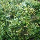 Cestou rostla spousta borůvek!