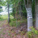 Cesta lesem může být životu nebezpečná :-)
