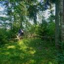 Cesta lesem pak vypadala následově. Polomy, vysoká tráva, prostě hrůza. Naštěstí taková nebyla v celé délce, ale postup se významně zpomaloval.