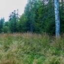 Vysokou travou. Ještě že bylo sucho. Značení ale bylo dostatečné, nebloudili jsme.