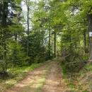 V sedle nad Herolticemi (aneb Valteřice - hájovna) jsme odolali pokušení na babiččiny buchty a pokračujeme dál po běžeckých trasách. V lese je po letošní zimě doslova pohroma :-(