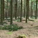 Procházka po lese je k pláči