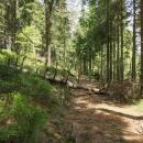 Což o to, červená zpočátku vedla pěknou lesní cestou, ta ale záhy skončila a zhruba v místech, kde se připojila polská hranice, začalo peklo... :-(